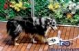 Tasarruflu Köpek Çeşmesi