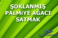 �oklam�� Palmiye A�ac� Satmak